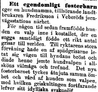 Klippet kommer från Kalmar 18980108